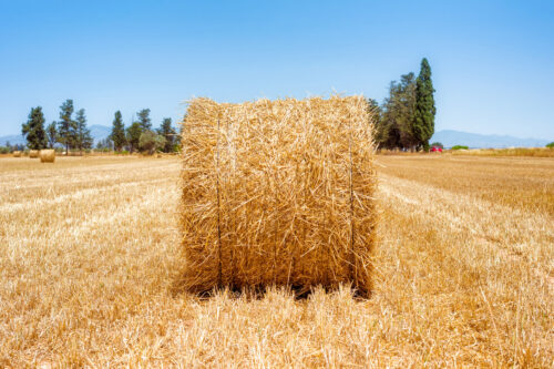 Close up of a hay straw bale on a field - slon.pics - free stock photos and illustrations