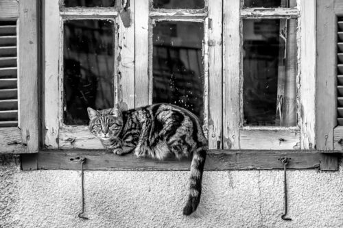 Cat on the window of an old house - slon.pics - free stock photos and illustrations