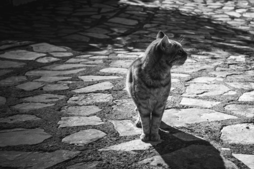 Cat walking alone on the village street - slon.pics - free stock photos and illustrations