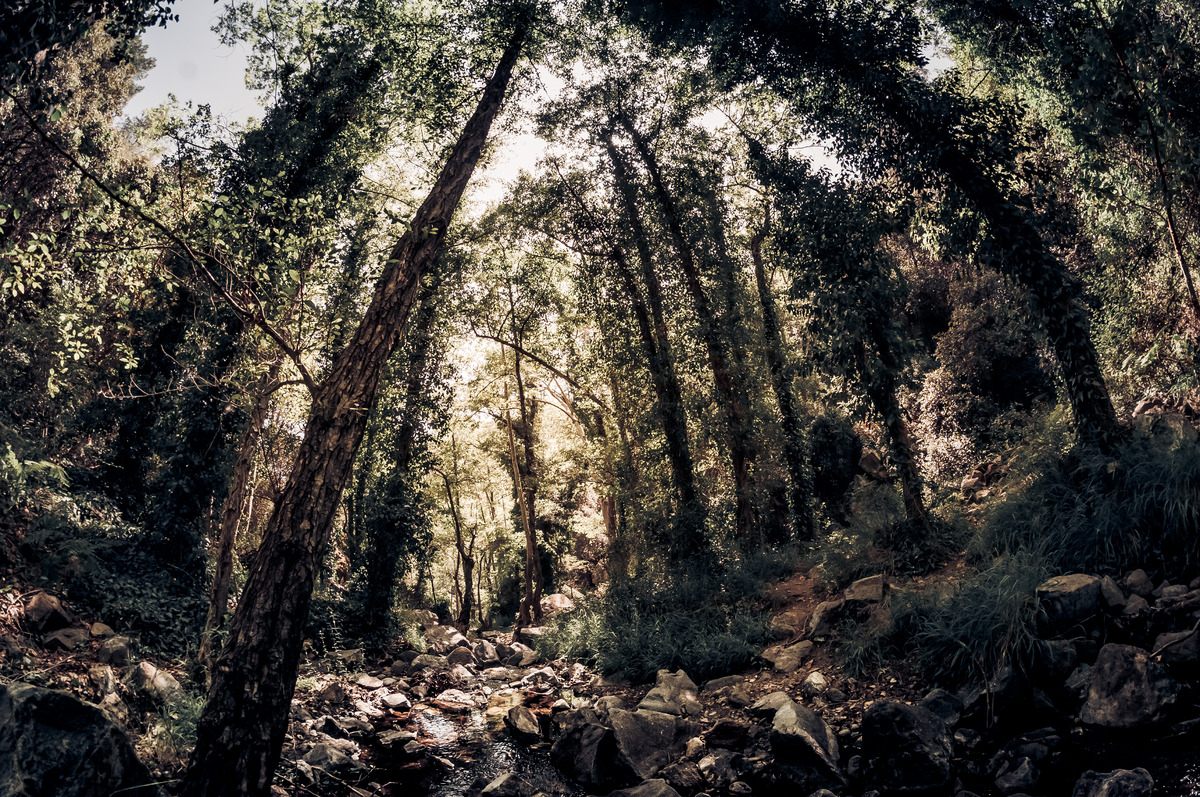 Creek in a forest - slon.pics - free stock photos and illustrations