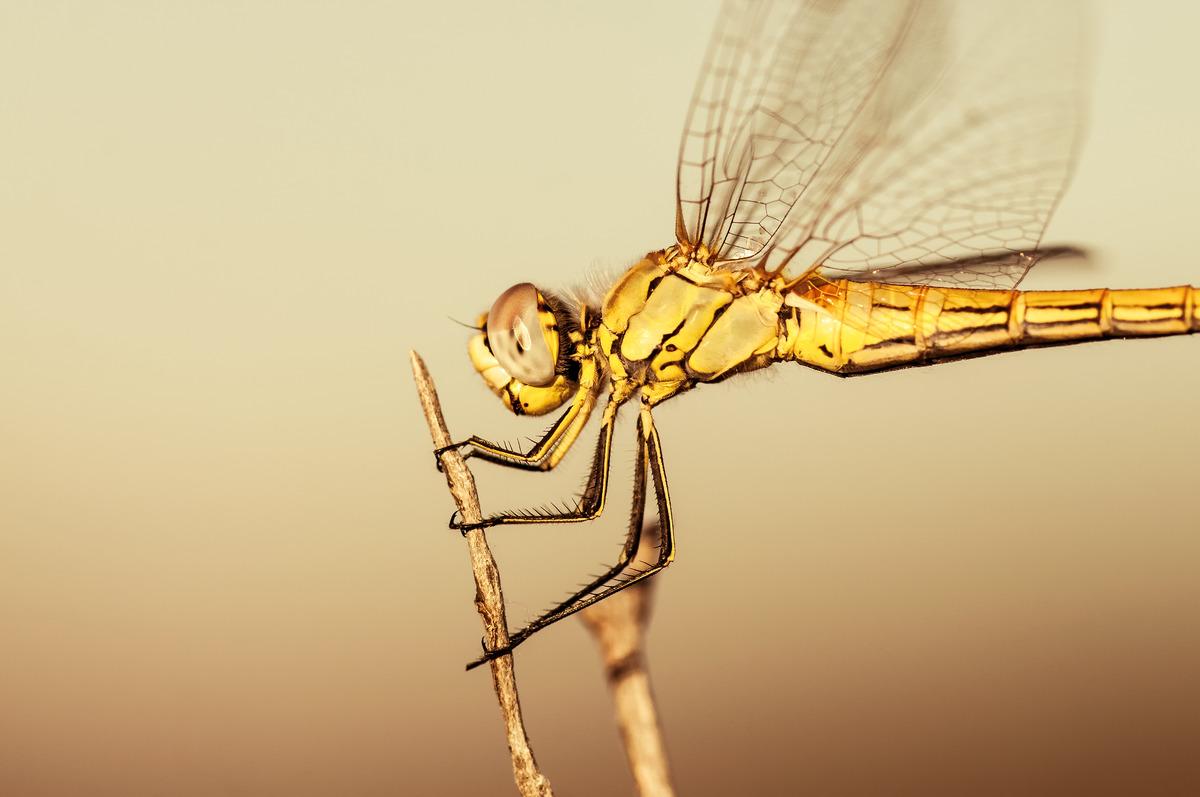 Dragonfly - slon.pics - free stock photos and illustrations