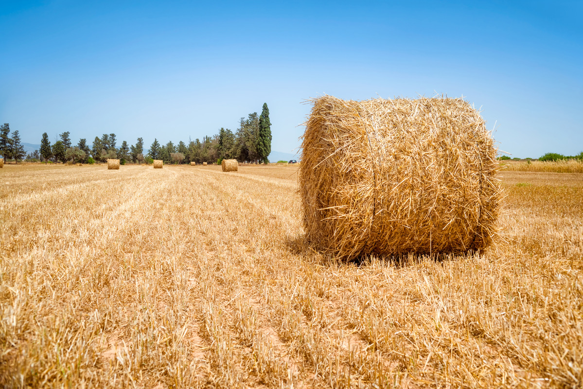 Hay bale on a summers day - slon.pics - free stock photos and illustrations