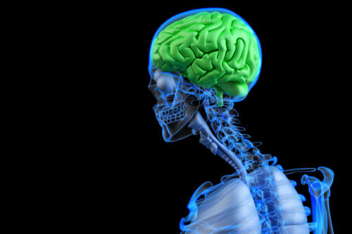 Healthy human brain concpet. 3D illustration - slon.pics - free stock photos and illustrations