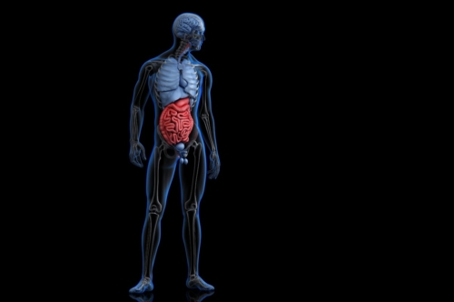 Illustration of human anatomy with highlighted digestive system. 3D illustration. Contains clipping path - slon.pics - free stock photos and illustrations