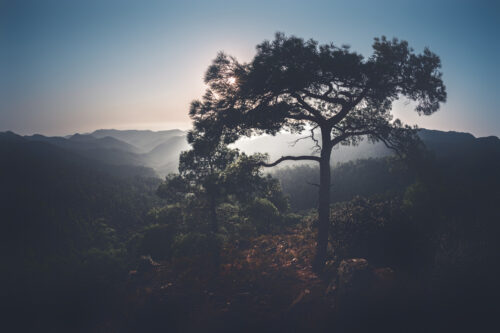 Pine on hilltop. Troodos mountains, Cyprus - slon.pics - free stock photos and illustrations