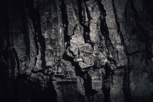 The rough bark - slon.pics - free stock photos and illustrations