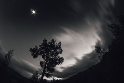 Windy night with silhouetted pine and stars - slon.pics - free stock photos and illustrations