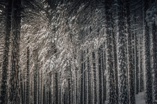 Winter forest - slon.pics - free stock photos and illustrations