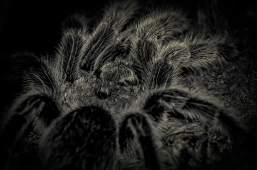 Creepy spider close-up - slon.pics - free stock photos and illustrations