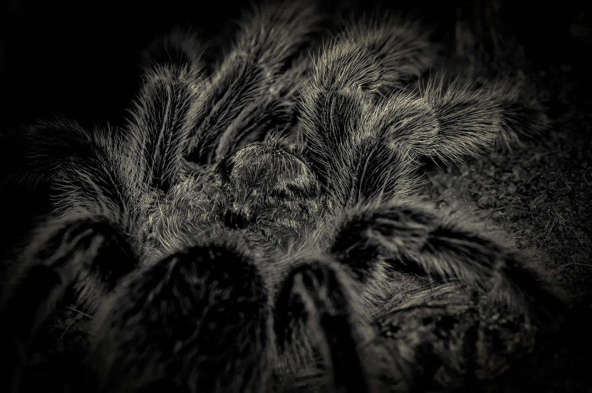 Creepy spider close-up - slon.pics - free stock photos and illustrations
