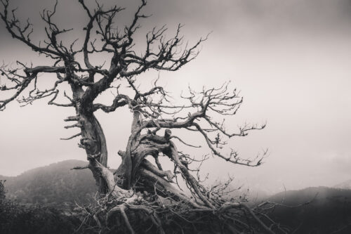 Dead tree in the foggy mountains - slon.pics - free stock photos and illustrations