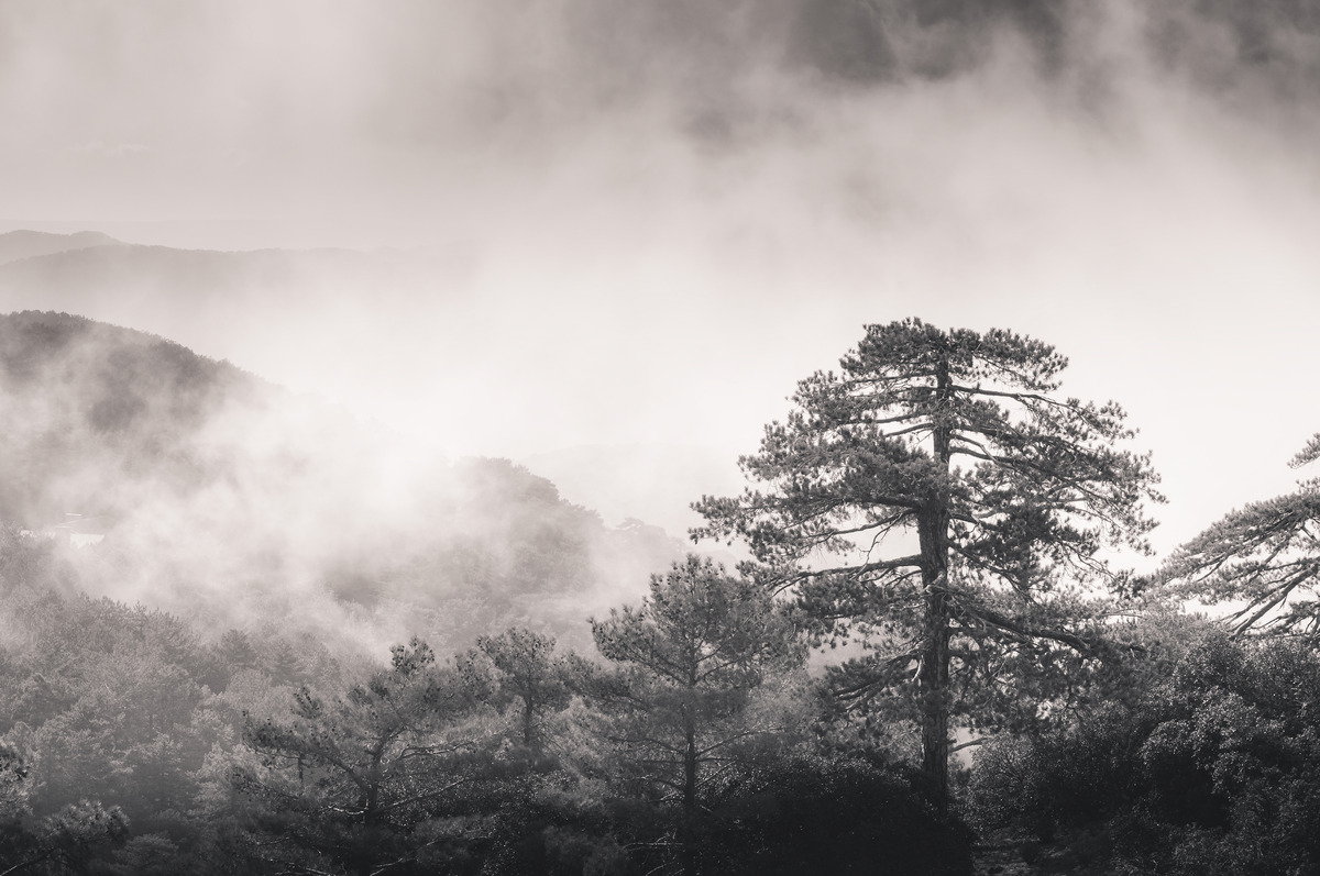 Fog mist rising through the pines - slon.pics - free stock photos and illustrations