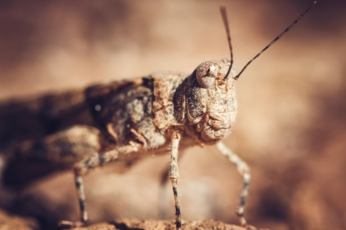 Grasshopper. Macro - slon.pics - free stock photos and illustrations