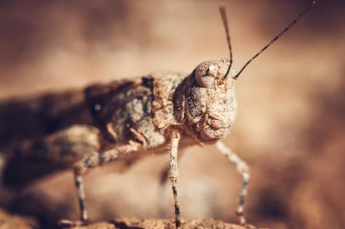 Grasshopper. Macro - slon.pics - free stock photos and illustrations