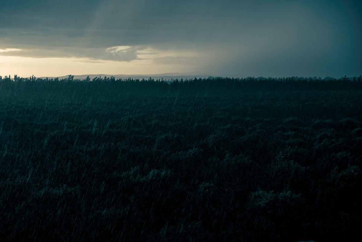 Night rain over the orchard - slon.pics - free stock photos and illustrations