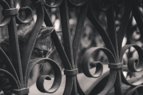 Sad kitten behind park fence - slon.pics - free stock photos and illustrations