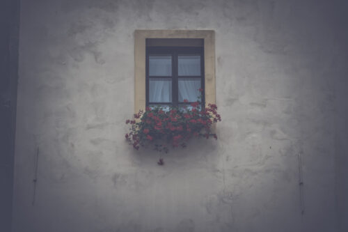 Window with flowers in box - slon.pics - free stock photos and illustrations
