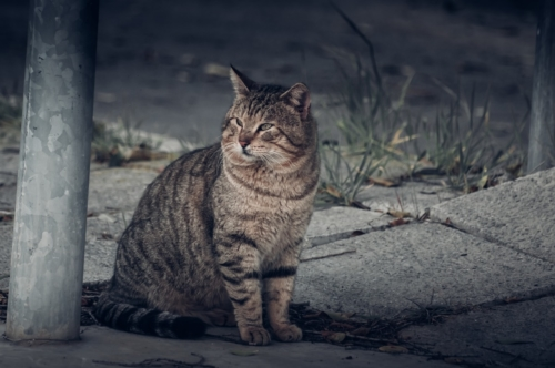 Cat on the street - slon.pics - free stock photos and illustrations