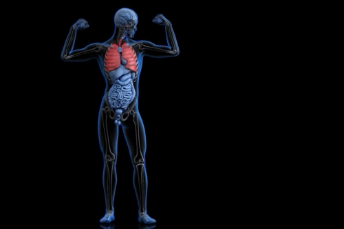 Posing athlete with highlighted lungs. 3D illustration - slon.pics - free stock photos and illustrations