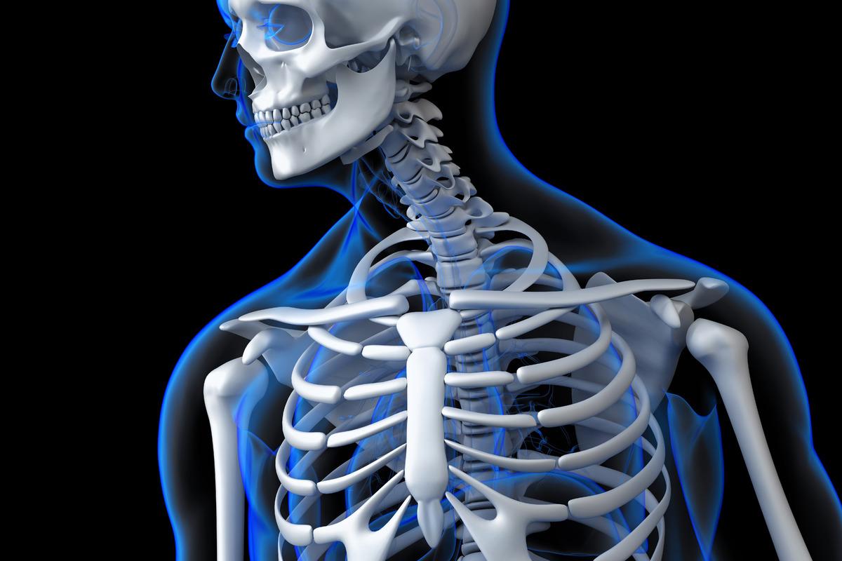 The human skeleton - slon.pics - free stock photos and illustrations
