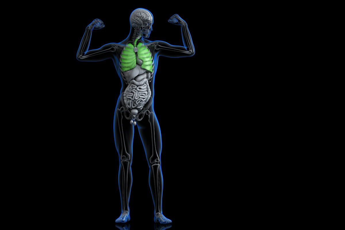 Athlete with healthy green colored lungs - slon.pics - free stock photos and illustrations