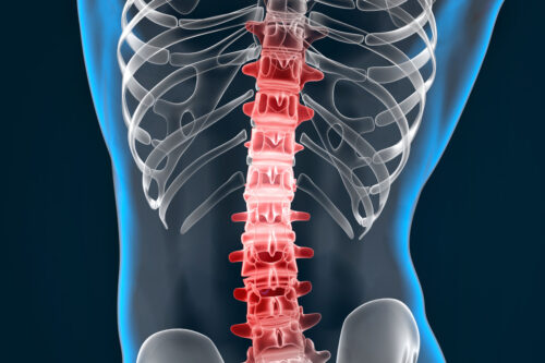 Highlighted spine - slon.pics - free stock photos and illustrations