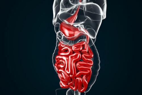 Human Digestive System Anatomy (Stomach with Small Intestine). 3D illustration. Contains clipping path - slon.pics - free stock photos and illustrations