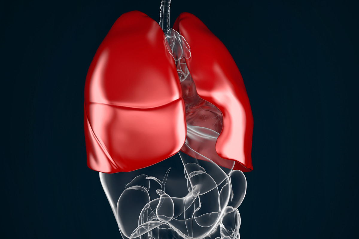 Human lungs, front view - slon.pics - free stock photos and illustrations