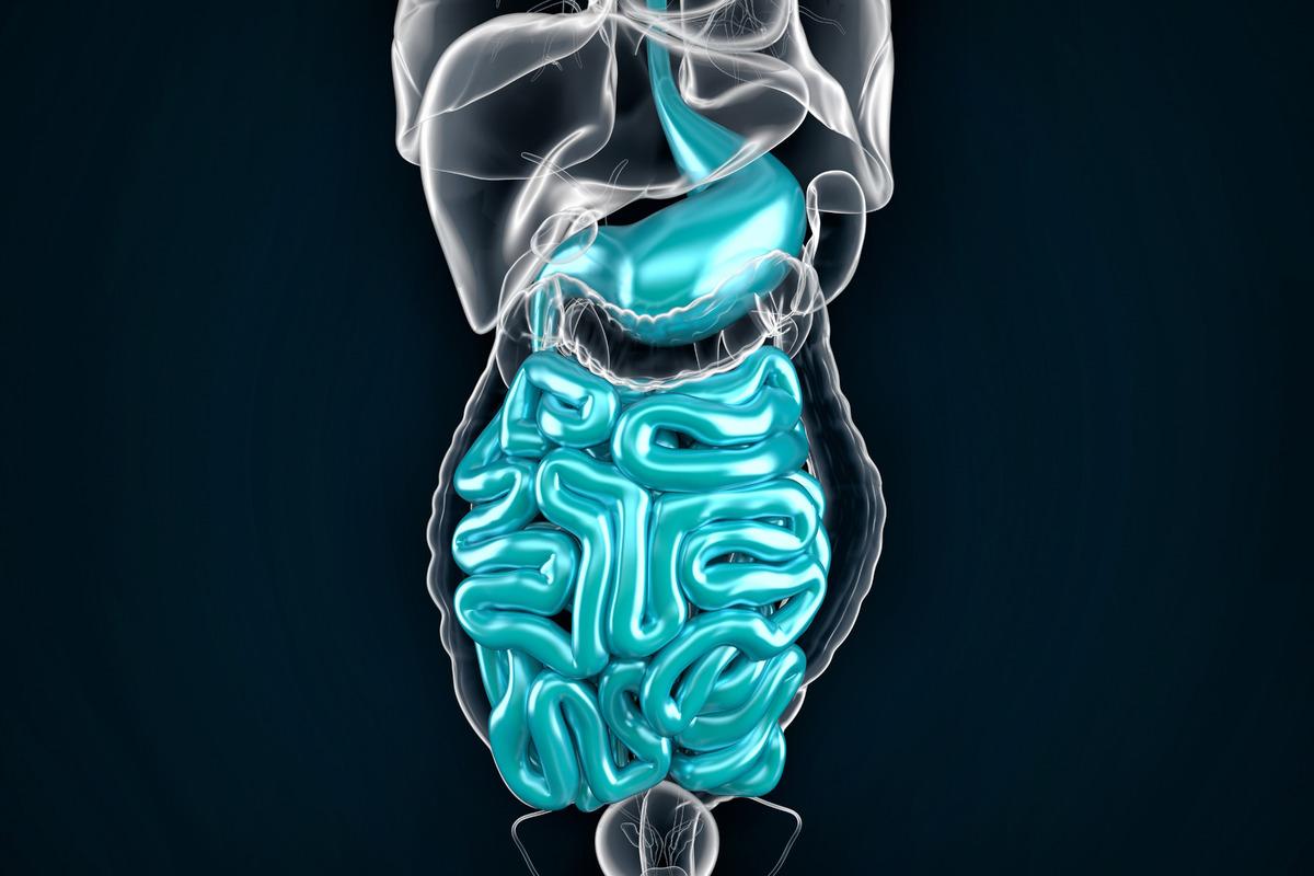 Intestine. 3D illustration - slon.pics - free stock photos and illustrations
