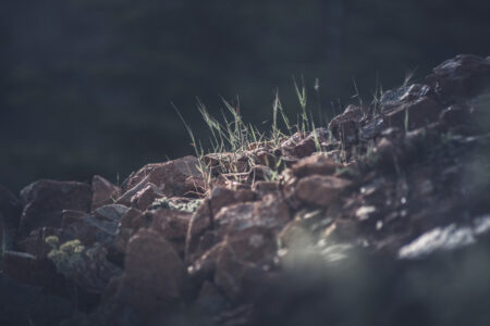 Close-up of grass sprouting through the stones - slon.pics - free stock photos and illustrations
