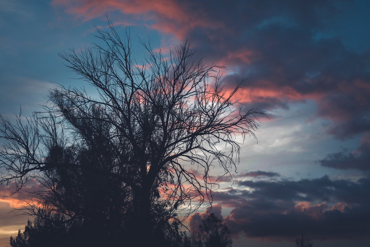 Dead tree silhouetting against sunset - slon.pics - free stock photos and illustrations