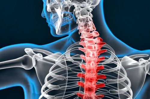 Illustration of human spine - slon.pics - free stock photos and illustrations