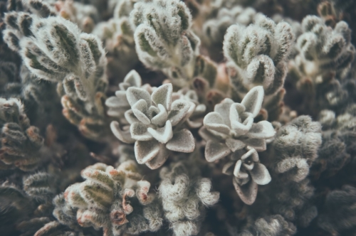 Succulent background - slon.pics - free stock photos and illustrations