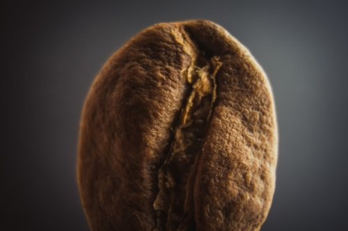 Single coffee bean. Extremely shallow depth of field - slon.pics - free stock photos and illustrations