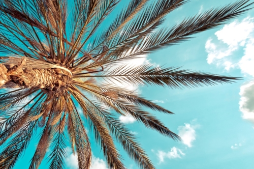Palm tree against blue sky - slon.pics - free stock photos and illustrations