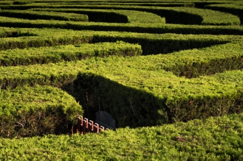 Part of garden maze - slon.pics - free stock photos and illustrations