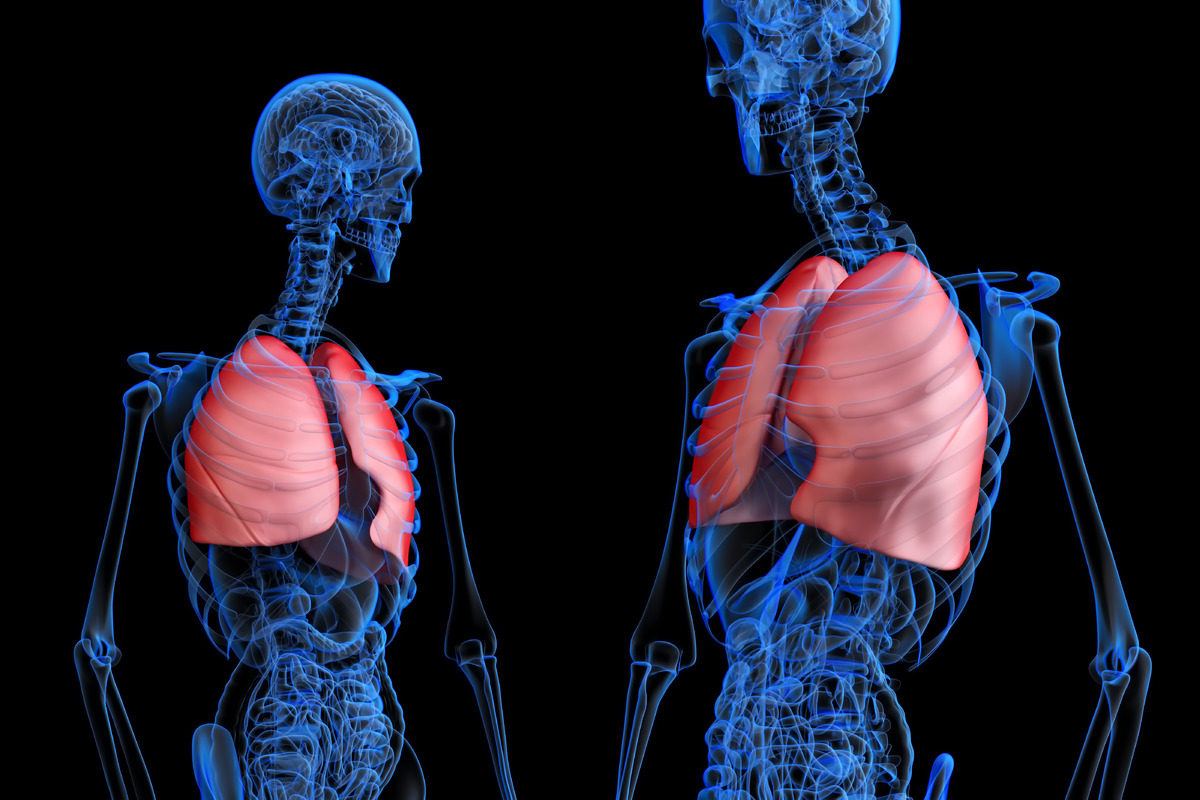 Human male anatomy with red highlited lungs - slon.pics - free stock photos and illustrations