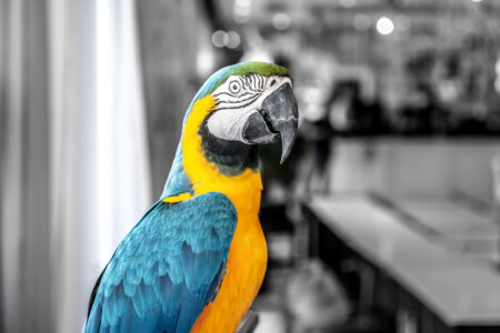 Macaw parrot portrait - slon.pics - free stock photos and illustrations